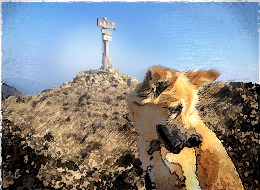 東鳳翩山 743m 愛犬クッキーと