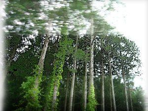 再度山・洞川林道の樹林