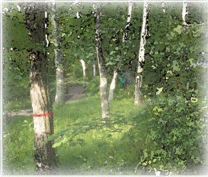 木に巻かれた赤テープ