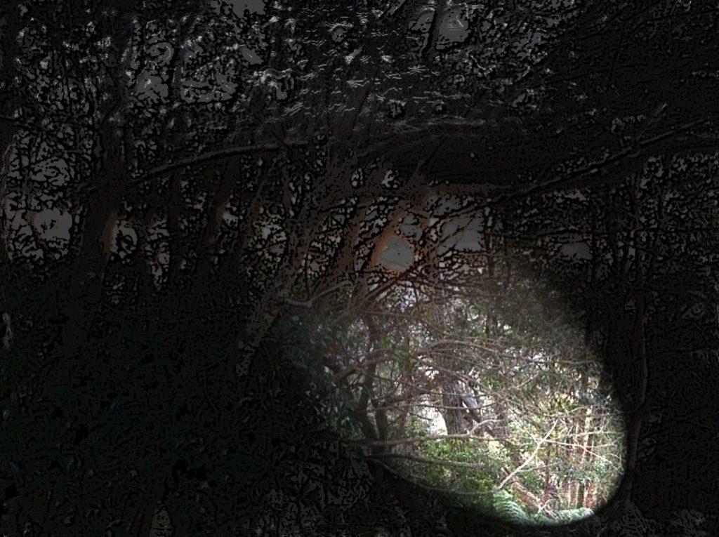 暗闇の山道をライトで照らす
